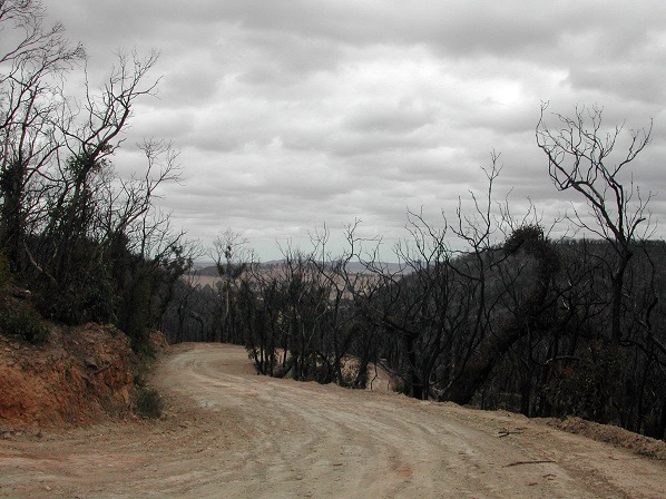 The arid landscape of the Australian bush as a backdrop for Wood's characters. Image Credit: Elizabeth Donoghue via Flickr Creative Commons
